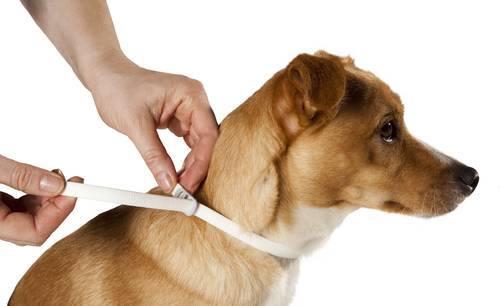 Mejor collar para perro