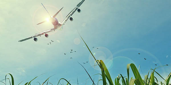 vuelos low cost para vaciones con niñ@s