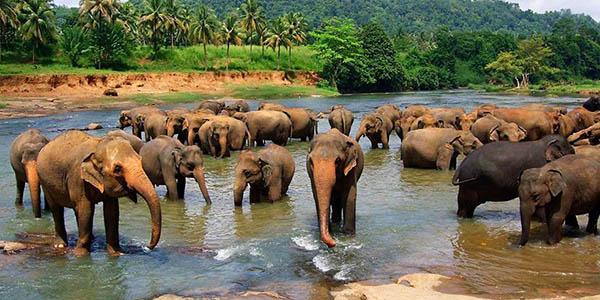 Sri Lanka circuito organizado relación calidad-precio estupenda
