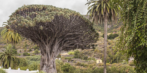 alojamiento barato Icod de los vinos Tenerife