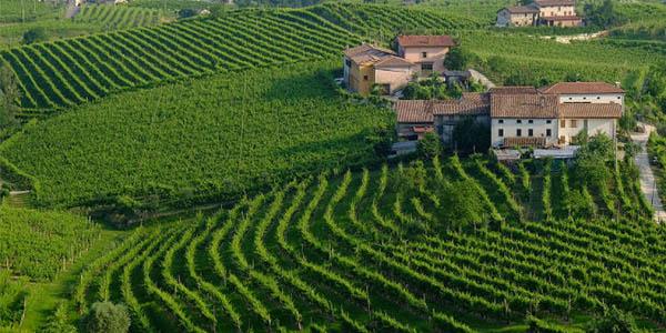 Colinas Prosecco Conegliamo Italia Patrimonio de la Humanidad